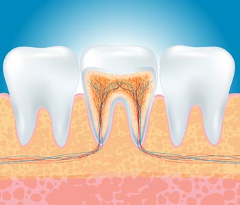 Root Canal Therapy Oakville - Minimally invasive root canals
